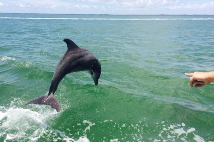 3.2A_CaptivaIsland_Slide_15_Dolphin_from_boat_700x465