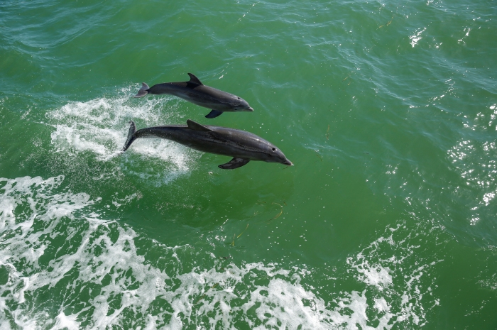 dolphins-2_700x465